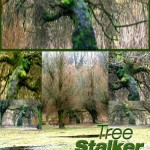 Photo entitled Tree Stalker