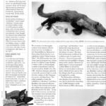 Scan of full article from Fortean Times March 2017 issue re Fried Foutines